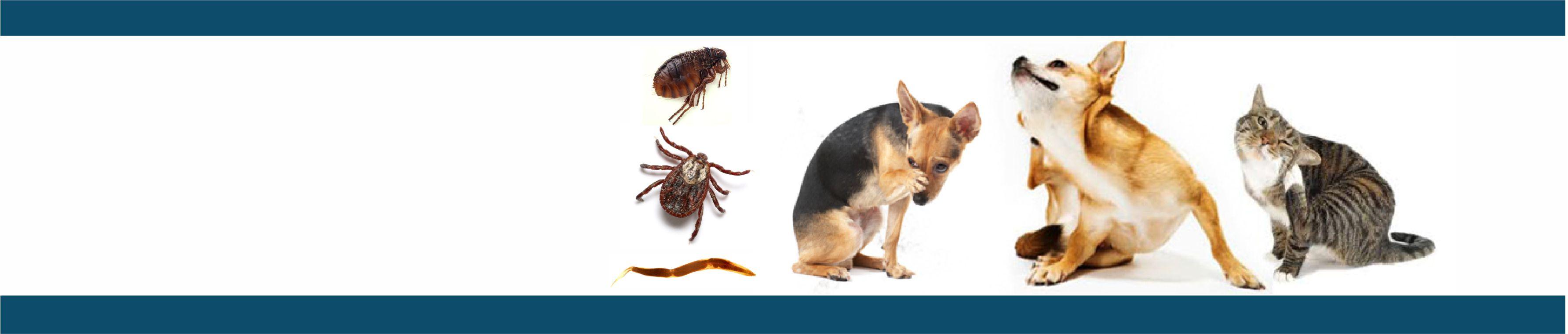 Pest Control & Inoculations